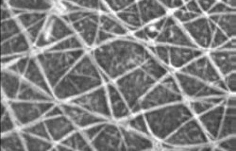 תאי גזע – חלום או מציאות?